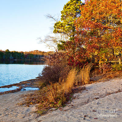 Long Leaf Pine Photograph - Indian Summer by Michelle Wiarda