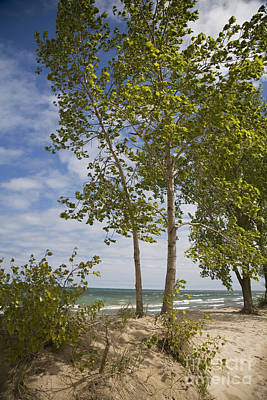 Photograph - Indiana Dunes by Jim West
