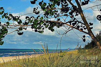 Indiana Photograph - Indiana Dunes Tree Beachscape  by Amy Lucid