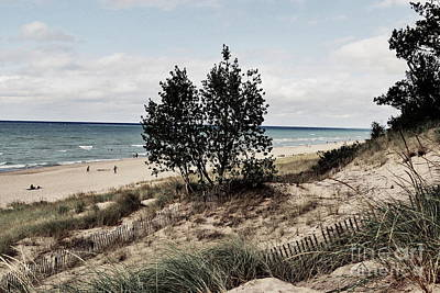 Indiana Photograph - Indiana Dunes Two Trees by Amy Lucid