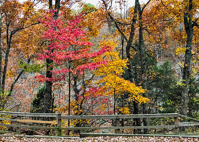 Photograph - Indiana Fall Color by Alan Toepfer