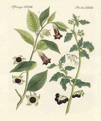 Deadly Drawing - Indigenous Poisonous Plants by Splendid Art Prints