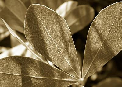 Photograph - Indigo Leaves  by Chris Berry