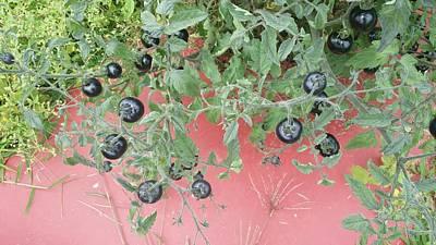 Indigo Tomato Reflections Art Print by Mark Victors