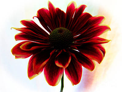 All You Need Is Love - Indoor Dahlia by Tina M Wenger