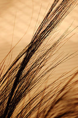 Photograph - Indoor Grasses by Michael McGowan