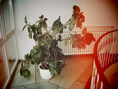 Plant Wall Art - Photograph - Indoor Plant Standing In The Hallway by Matthias Hauser