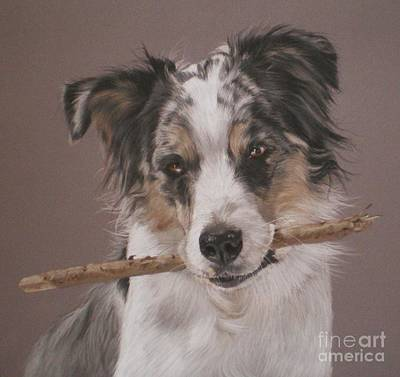 Pastel - Indy - Border Collie by Joanne Simpson