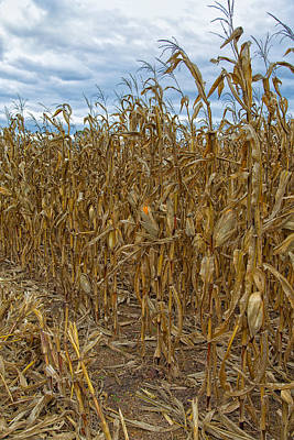 Photograph - Infamous Cornfield by John M Bailey