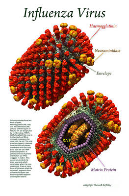 Digital Art - Influenza Virus Poster White by Russell Kightley