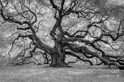 Photograph - Infrared Angel Oak by Dale Powell