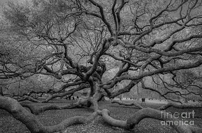 Photograph - Infrared Angel Oak Tree by Dale Powell