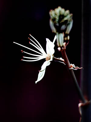 infrared Asphodel Art Print by Stelios Kleanthous
