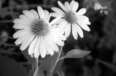 Photograph - Infrared - Coneflower 01 by Pamela Critchlow