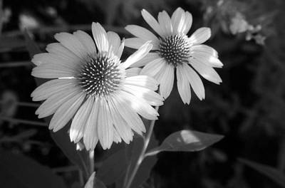 Photograph - Infrared - Coneflower 02 by Pamela Critchlow