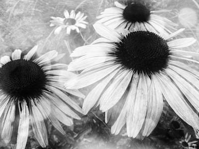 Photograph - Infrared Coneflowers by Shawna Rowe