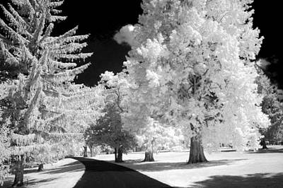 Photograph - Infrared Delight by Paul W Faust -  Impressions of Light