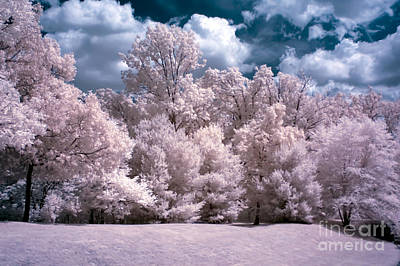 Photograph - Infrared Dreams by Anthony Sacco