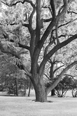 Photograph - Infrared Elm Tree by Denise Bush