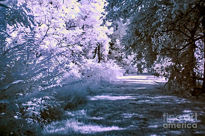 Photograph - Infrared Morning by Anthony Sacco