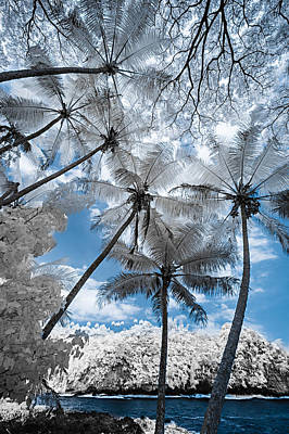 Photograph - Infrared Palm Trees On The Coast by Jason Chu