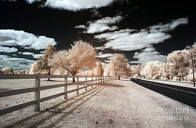 Photograph - Infrared Park Drive by John Rizzuto