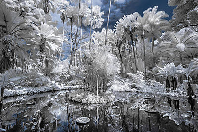 Photograph - Infrared Pond And Reflections 1 by Jason Chu