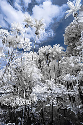 Photograph - Infrared Pond And Reflections 2 by Jason Chu