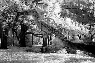 Infrared Surreal Gothic South Carolina Trees Landscape Print by Kathy Fornal