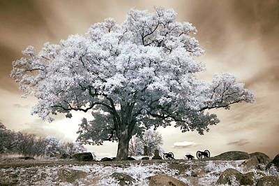 Devils Den Photograph - Infrared Tree On A Hill In Gettysburg by Paul W Faust -  Impressions of Light