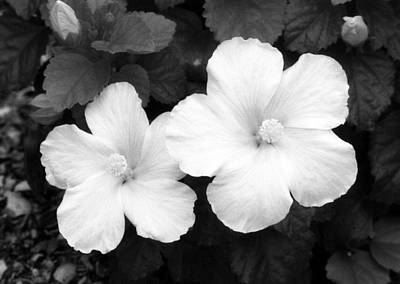 Photograph - Infrared - Tropical Hibiscus 02 by Pamela Critchlow