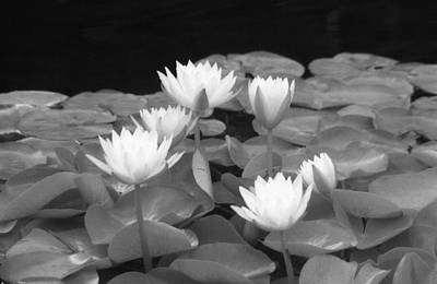 Photograph - Infrared - Water Lilies 01 by Pamela Critchlow