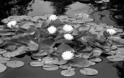 Photograph - Infrared - Water Lilies 02 by Pamela Critchlow