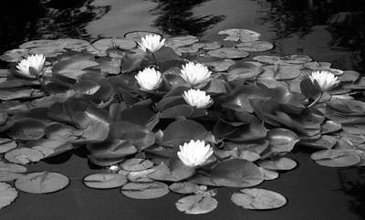 Photograph - Infrared - Water Lilies 03 by Pamela Critchlow