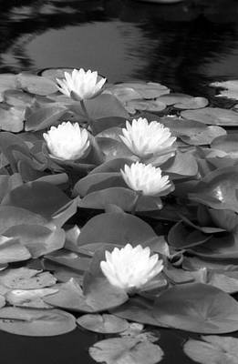 Photograph - Infrared - Water Lilies 04 by Pamela Critchlow