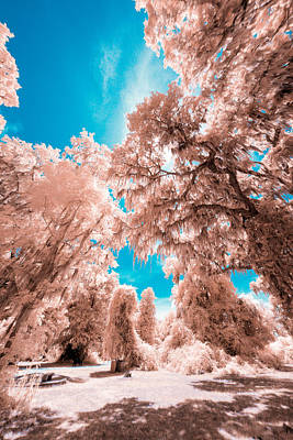 Infrared World Art Print
