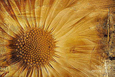 Daisies Digital Art - Infusion by John Edwards
