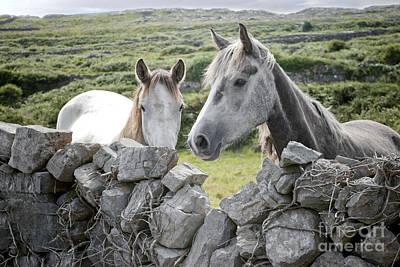 Digital Art - Inishmore Horses by Danielle Summa