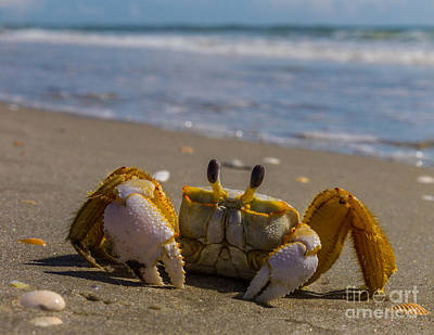 Photograph - Injured Sand Crab V by Gene Berkenbile