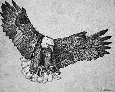 Eagle Drawing - Ink Eagle by James Williams