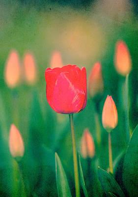 Photograph - Ink Tulip Background  by Svetoslav Sokolov