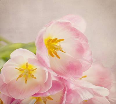 Photograph - Inner Beauty - Pink Tulips by Kim Hojnacki