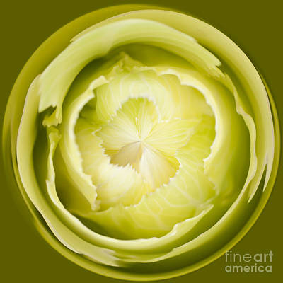 Manipulation Photograph - Inner Cabbage Orb by Anne Gilbert