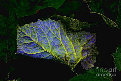 Photograph - Inner Glow by Casper Cammeraat