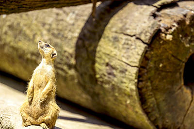 Animals Photograph - Inner Peace by Jijo George