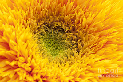Inner Sunflower Art Print by Anne Gilbert