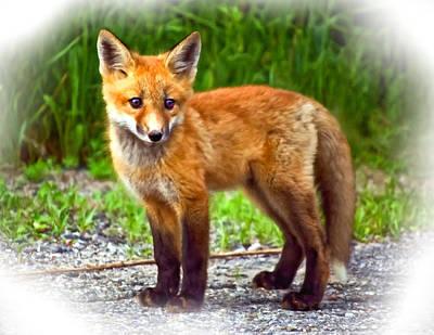 Fox Photograph - Innocence II Paint by Steve Harrington