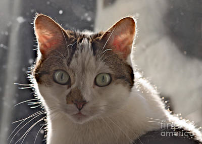 Photograph - Inquisitive Cat by Jeremy Hayden