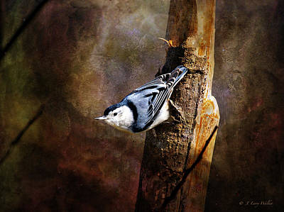 Print featuring the digital art Inquisitive Nuthatch by J Larry Walker