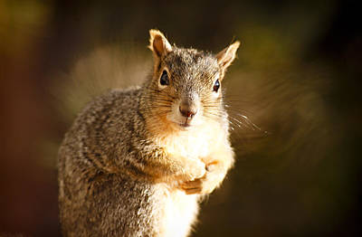 Photograph - Inquisitive Squirell by Marilyn Hunt